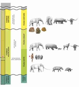 Berkala Arkeologi; homo erectus; java